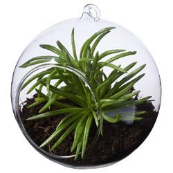Terrario sferico per la coltivazione di tutti i tipi di...